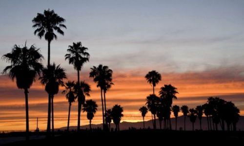 Zdjecie USA / LA / Venece Beach / KONKURS