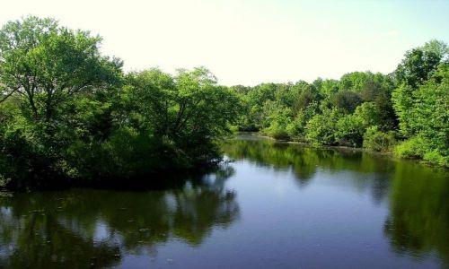 Zdjęcie USA / North Carolina / okolice Sanford - park i Zoo / stawy w parku