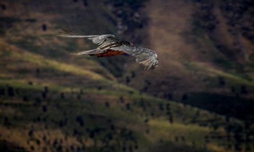 Zdjęcie UZBEKISTAN / wilajet samarkandzki / w drodze do Shahrisabz / Cichym scigałem go lotem....