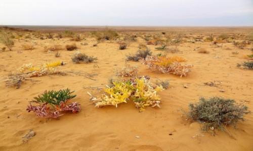 Zdjęcie UZBEKISTAN / Środkowy Uzbekistan / Kyzyłkum / Wiosna na pustyni Kyzyłkum