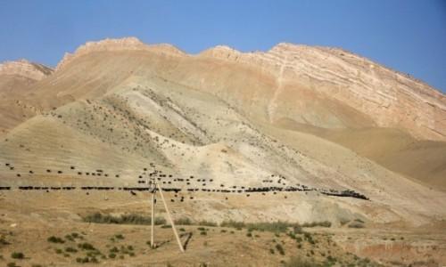 Zdjęcie UZBEKISTAN / Surchandaria / - / W Górach Bajsuntau