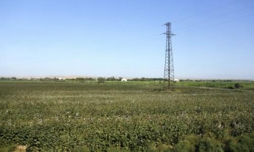 Zdjecie UZBEKISTAN / Surchandaria / Termez / Uprawa bawełny