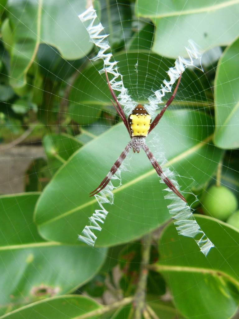 Zdjęcia: Emua, Efate, Krakers?, VANUATU