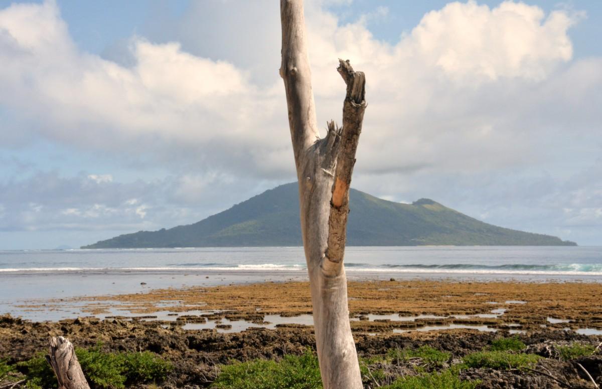 Zdjęcia: Wyspa Emao, Efate, Impresja na wyspę i kawałek patyczka, VANUATU