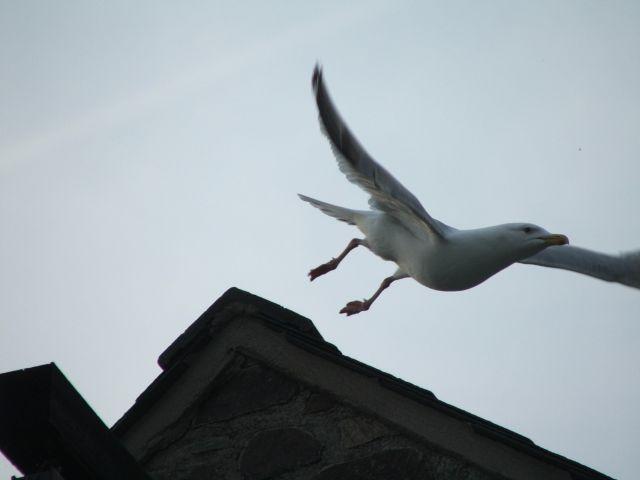Zdjęcia: Walia, Melduje że startuje, WALIA