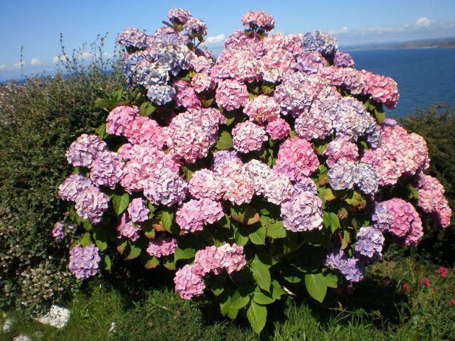 Zdjęcia: New Quay, Kwiaty, WALIA