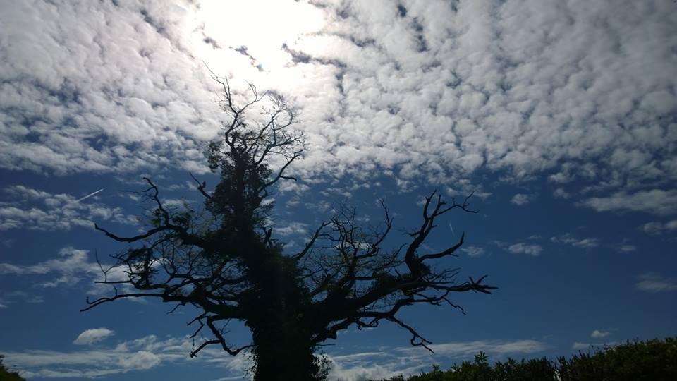 Zdjęcia: Okolice Brecon, Drzewo, WALIA
