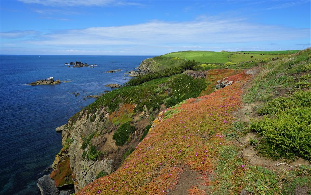 Zdjęcia: Lizard Point, Kornwalia, Kolorowy klif, ANGLIA