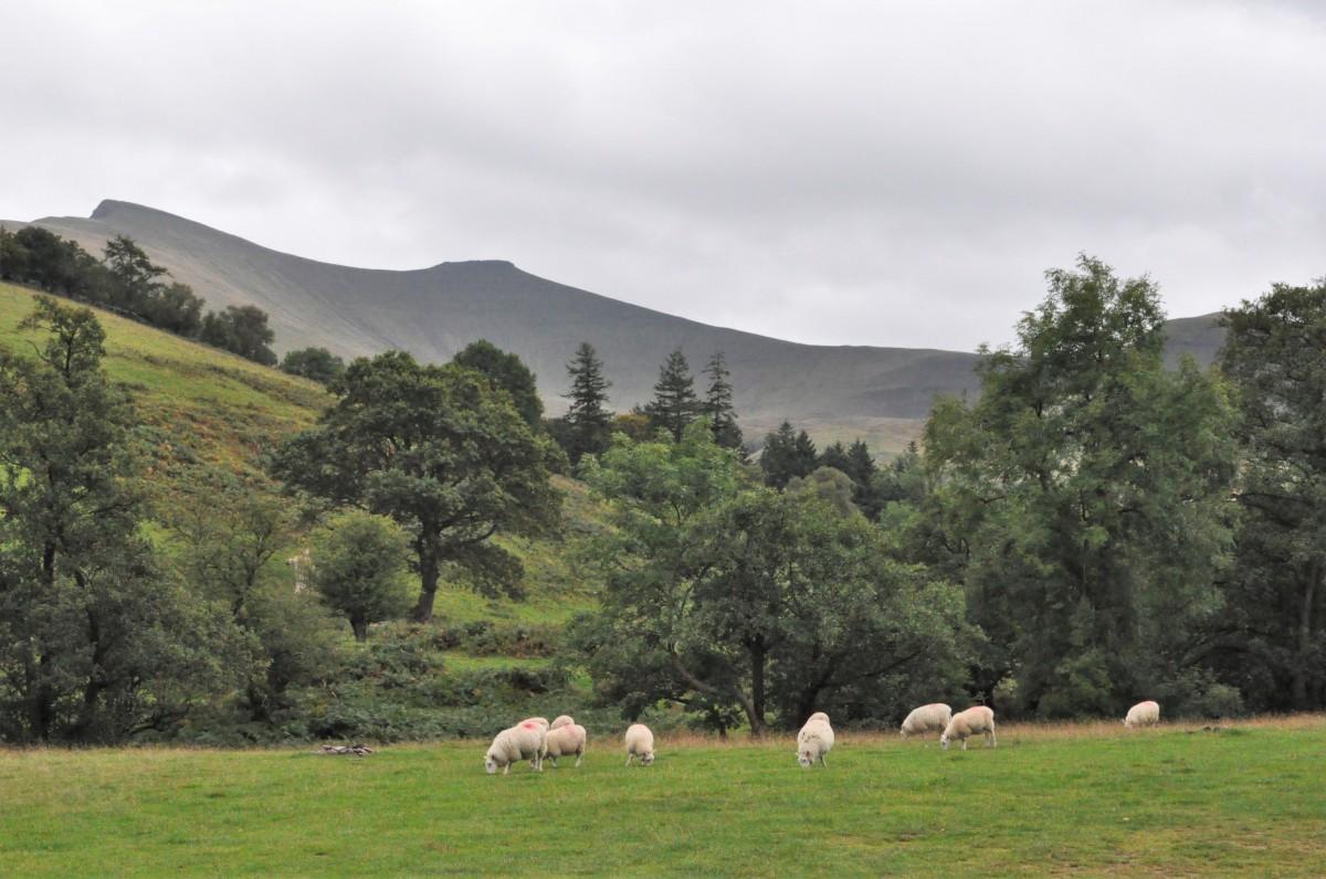 Zdjęcia: Brecon Beacons, Brecon Beacons, Brecon Beacons, WALIA