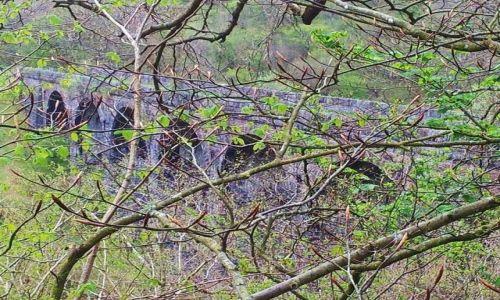 Zdjecie WALIA / - / Okolice Breon / Most