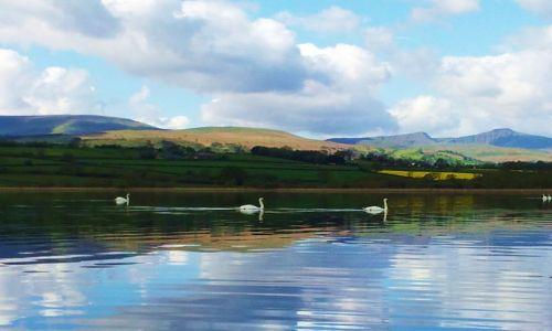 Zdjecie WALIA / - / Okolice Brecon / Langors Lake