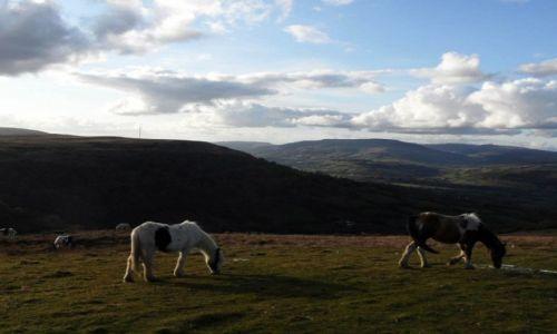 Zdjęcie WALIA / Brecon Beacons National Park / Brecon Beacons National Park / Park Narodowy