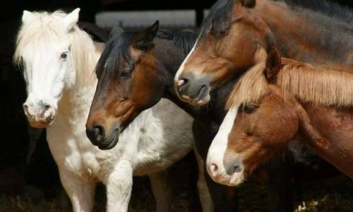 Zdjecie WALIA / - / Okolice Brecon / Konie
