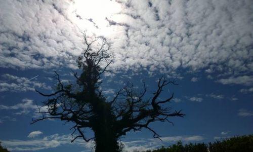 Zdjecie WALIA / - / Okolice Brecon / Drzewo