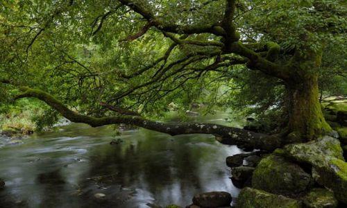 Zdjecie WALIA / Snowdon / Betws-Y-Coed / Rzeka Lafon Llugwy