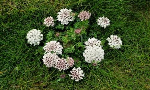 Zdjecie ANGLIA / Kornwalia / Newguay / Kompozycja kwiatowa w naturze