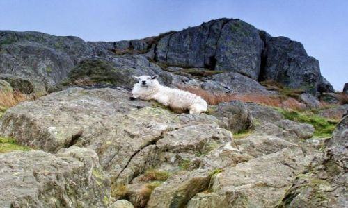 Zdjecie WALIA / North West-  Welsh / Snowdonia Ntional Park / takiemu to dobrze (a raczej takiej  !! :)))