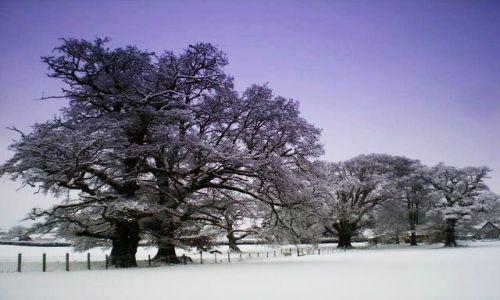 Zdjecie WALIA / - / Okolice Brecon / Zima w Walii 2