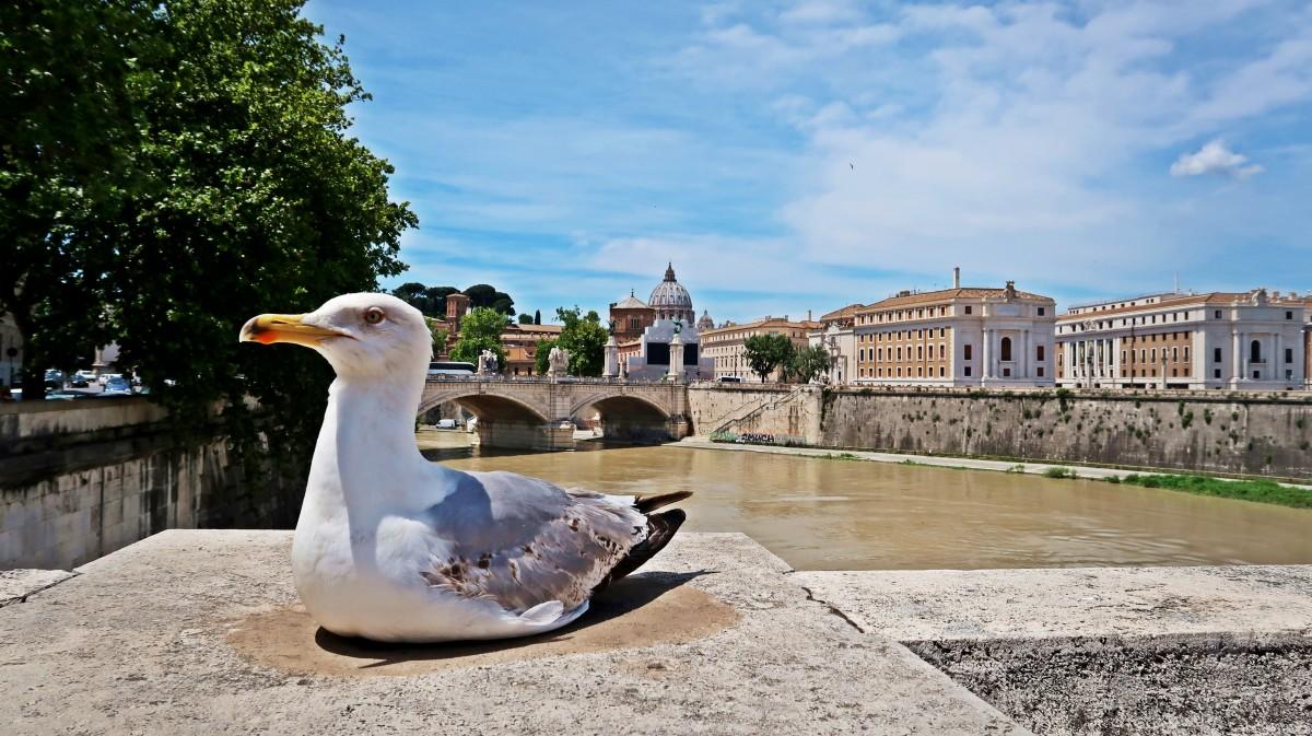 Zdjęcia: Watykan, Moje miejsce ;), WATYKAN