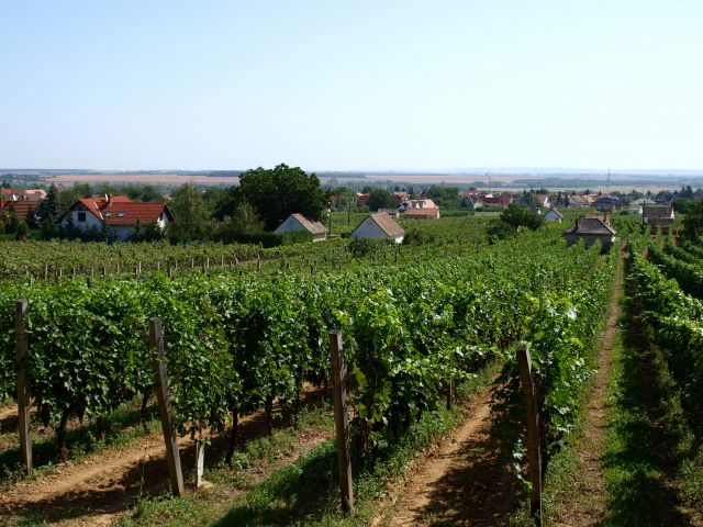 Zdjęcia: Villány, wyżyna panońska, węgierskie winnice, WĘGRY