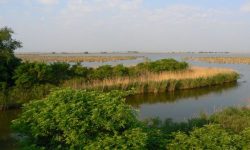 WĘGRY / Północne Węgry / PN Hortobagy / Park Narodowy Hortobagy- stawy rybne Hortobagy Halasto