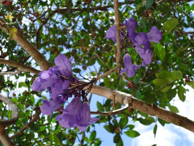 Zdjęcia: Canaima, Bolivar, Trochę roślinności, WENEZUELA