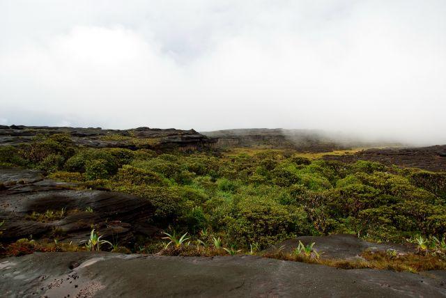 Zdjęcia: Roraima, Bolivar, oaza zieleni , WENEZUELA