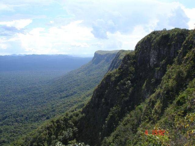 Zdj�cia: EL PAUI, wenezuela/brazylia, lasek na pograniczu, WENEZUELA