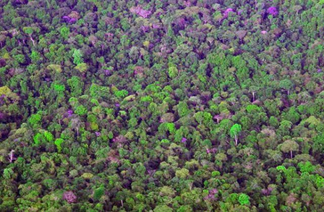 Zdj�cia: Dzungla Amazo�ska widziana z Malego samolotu, FOTO 8, WENEZUELA
