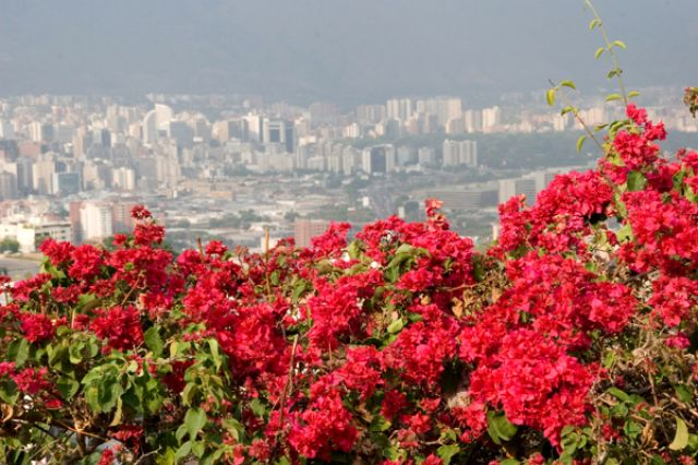 Zdj�cia: CARACAS, FOTO 1, WENEZUELA