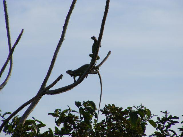 Zdjęcia: Los Lianos, Los Lianos, małpeczki, WENEZUELA