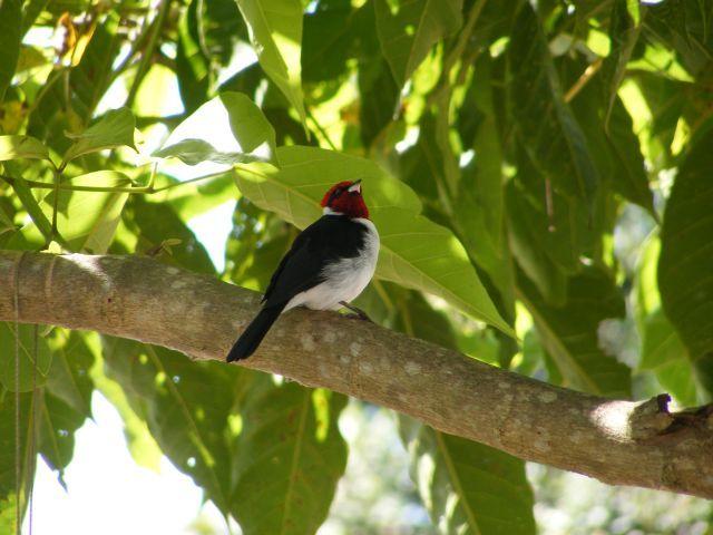 Zdjęcia: Los Lianos, Los Lianos, ptaszek nad Orinoko, WENEZUELA