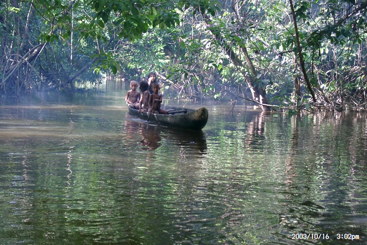Zdjęcia: Dżungla , Boca de Uracoa, Dżungla , WENEZUELA