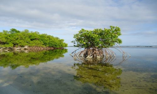 Zdjęcie WENEZUELA / Falcon / Park Narodowy Morrocoy / Wenezuelskie Karaiby