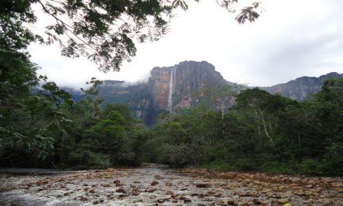 Zdjęcie WENEZUELA / Bolivar / Park Narodowy Canaima / Salto Angel