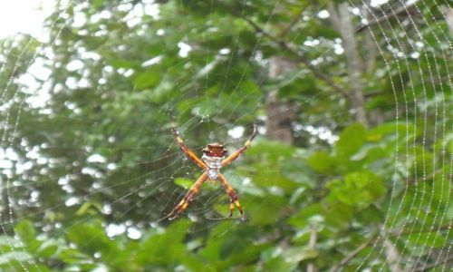 Zdjęcie WENEZUELA / Bolivar / Park Narodowy Canaima / Pajączek
