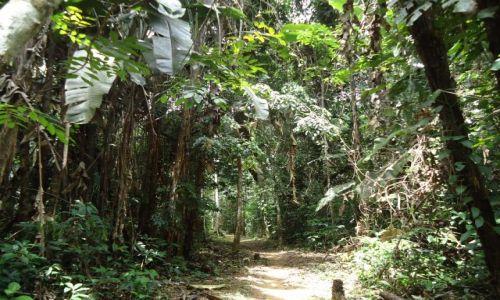 Zdjecie WENEZUELA / Bolivar / Rio Caura / Szlak w dżungli