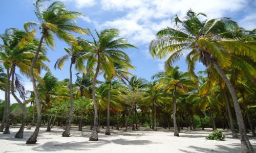 Zdjecie WENEZUELA / Falcon / Park Narodowy Morrocoy / Palmy na Cayo Sombrero