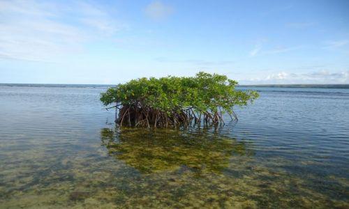Zdjecie WENEZUELA / Falcon / Park Narodowy Morrocoy / Krzewy mangrowe