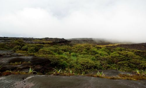 Zdjecie WENEZUELA / Bolivar / Roraima / oaza zieleni