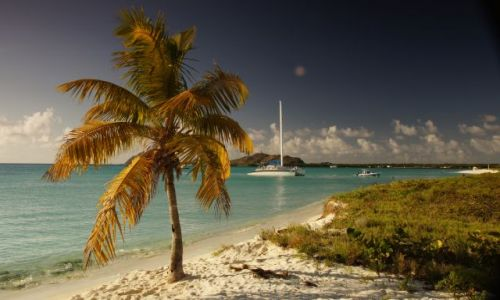 Zdjecie WENEZUELA / Archipelag  / Los Roques / Samotna palemka na Morzu Karaibskim