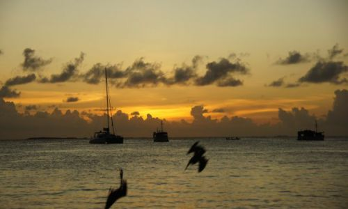 Zdjecie WENEZUELA / Archipelag  / Los Roques / Wieczorne polowanie pelikanów