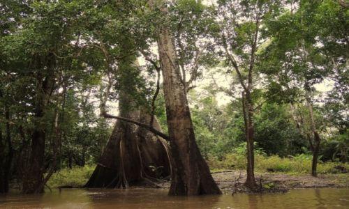 Zdjęcie WENEZUELA / Delta Orinoko / Rozlewiska / W dżungli