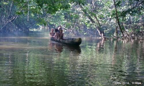 Zdjecie WENEZUELA / Boca de Uracoa / Dżungla  / Dżungla