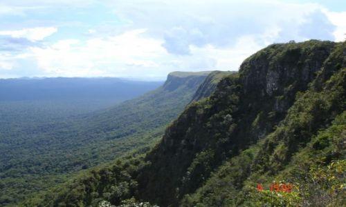 Zdjecie WENEZUELA / wenezuela/brazylia / EL PAUI / lasek na pograniczu