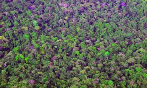 Zdjecie WENEZUELA / brak / Dzungla Amazońska widziana z Malego samolotu / FOTO 8