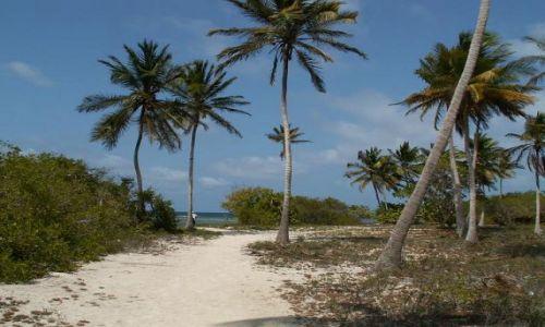 Zdjecie WENEZUELA / Chichiriviche / wysepka na morzu karaibskim / bezludna wyspa