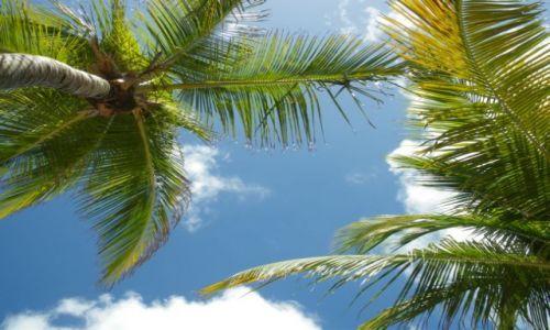 Zdjecie WENEZUELA / brak / Isla Margarita / Pod palmami