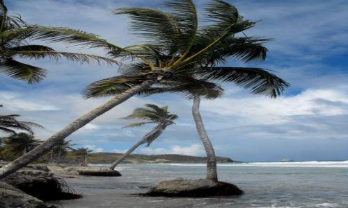 Zdjecie WENEZUELA / wyspa Margarita / Playa El Aqua / Playa el Aqua /Margarita/