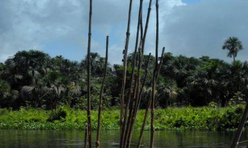 Zdjecie WENEZUELA / delta Orinoko / wioska indian / no to czas na połów...